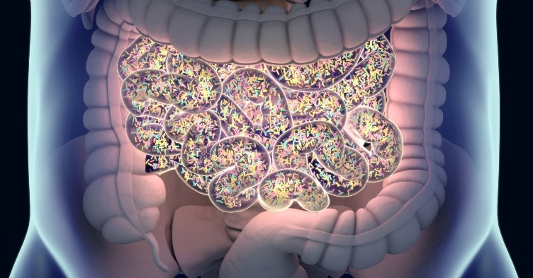 Gut bacteria could affect prostate cancer treatments